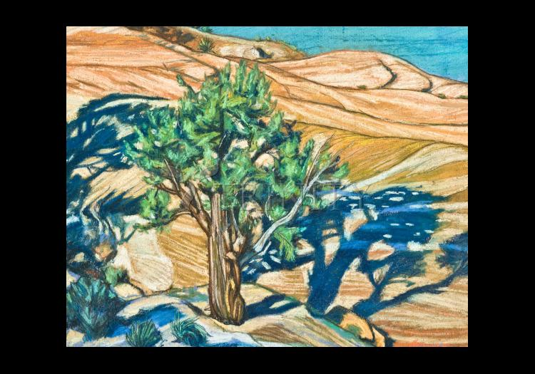 Holy Card - Tree Shadow on Slickrock by L. Williams