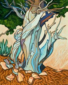Slept Under A Juniper by Lewis Williams, OFS
